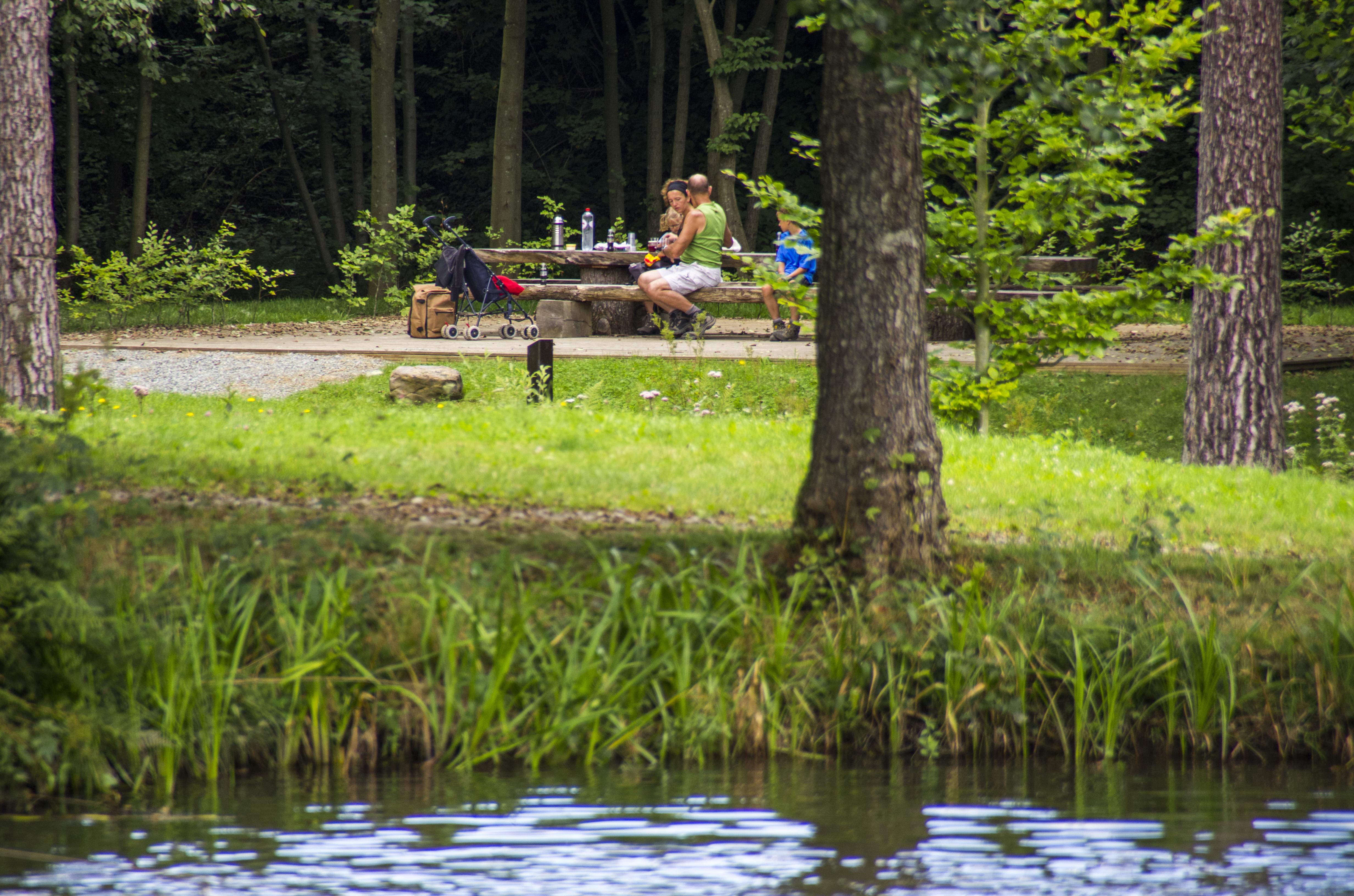 balade autour des étang de Mirwart