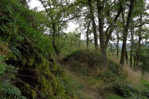 1158-paysage-randonnee-foret-credit-atgps-xl